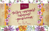 Wildflower PNG Watercolor Set Illustration