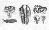 Paleontology Vintage Vector Illustrations [150 Items] Illustration